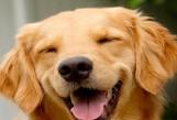 Dog Cropped